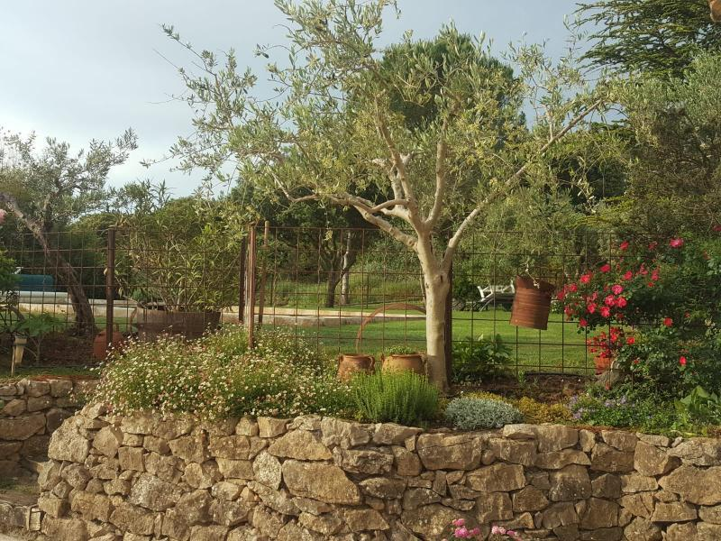 Holiday rental pool - Fox-Amphoux - Campagne Fourette - Luberon Provence